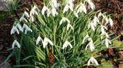 Szukaj wiosny w Bażantarni