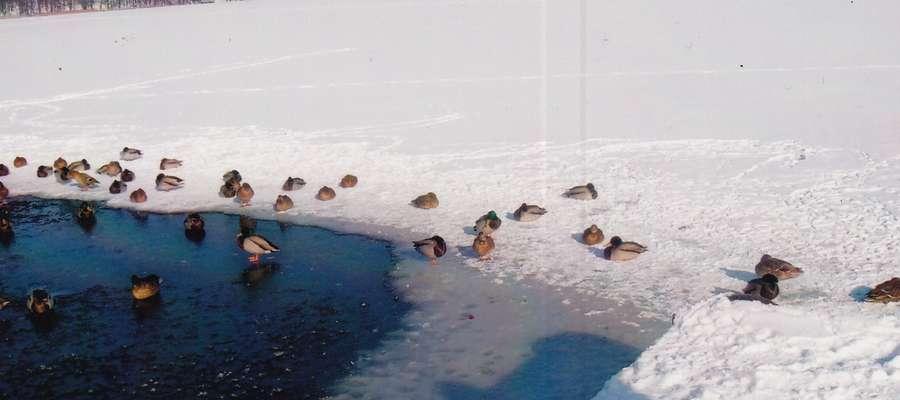 """Tegoroczną edycję plebiscytu """"Najładniejsze zdjęcie zimy"""" wygrała fotografia autorstwa pani Leokadii Liberackiej."""