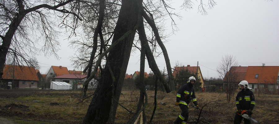 Wichura połamała konary jednego z przydroznych drzew.