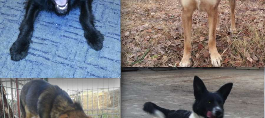 Cztery psiaki czekają na właścicieli