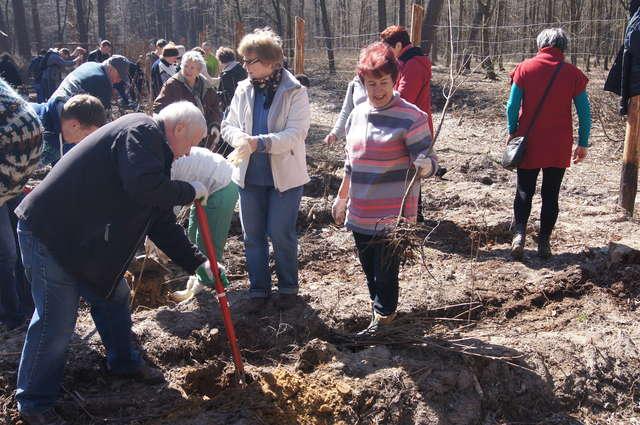 Słuchacze UTW posadzili ponad 2000 drzew - full image