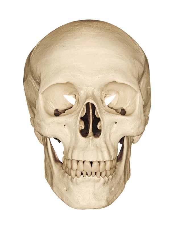 Drukowana czaszka?  - full image