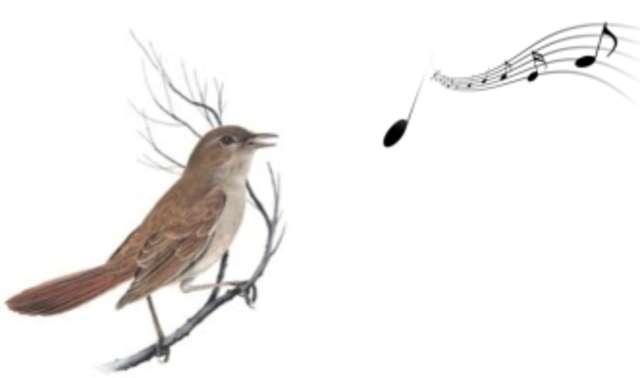 Co wynika ze śpiewu słowika? - full image
