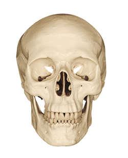 Drukowana czaszka?