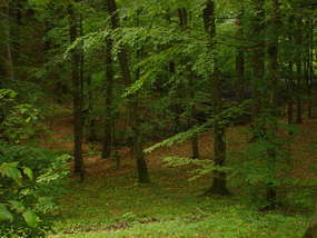 Leśny Kompleks Promocyjny Lasy Mazurskie