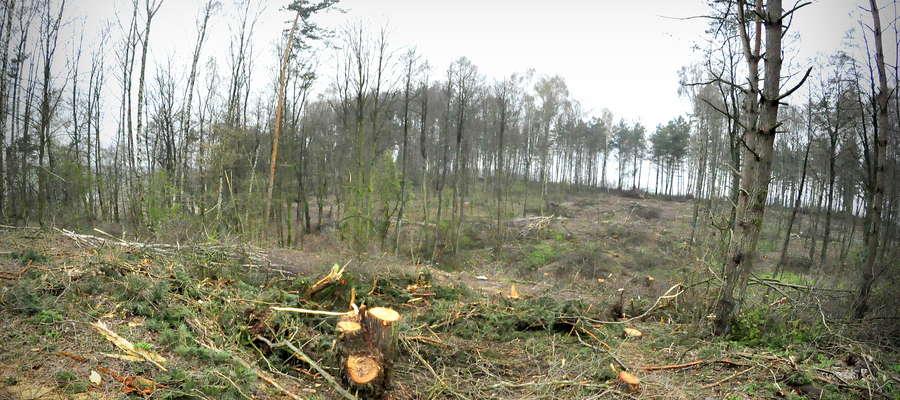 Na Łazach wycięto setki drzew