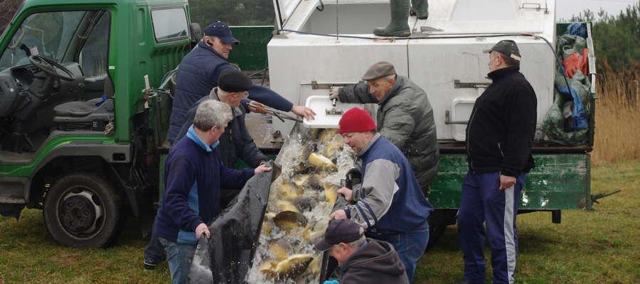 Wiosenne zarybianie łowiska Starorzecze Borek