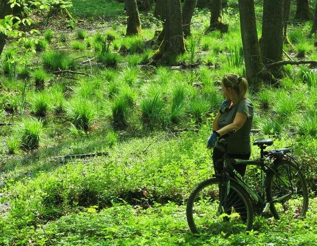 Biegnący przez gminę Godkowo czerwony szlak rowerowy to świetna propozycja dla miłośników aktywnego wypoczynku - full image