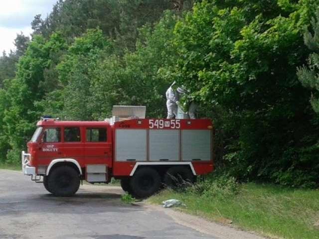 Strażacy z Bogut-Pianek walczyli z rojem pszczół - full image