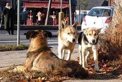Nur. Wydadzą ponad 23 tys. na bezdomne zwierzęta