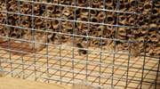 Pszczoły szybko zasiedliły pustostan