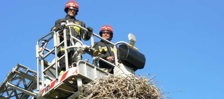 W sobotę (31 maja) braniewscy strażacy interweniowali niosąc pomoc bocianowi