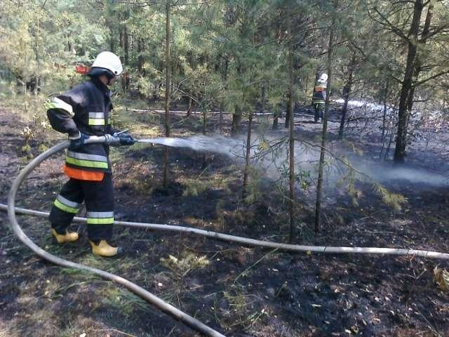 Spaliło się kilkaset metrów lasu - full image