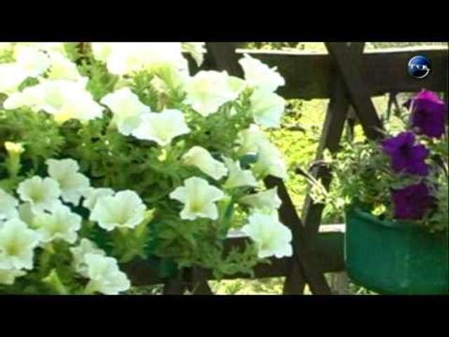 Zaręby Kościelne. Wybiorą najpiękniejszy ogródek w gminie - full image