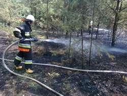 Spaliło się kilkaset metrów lasu