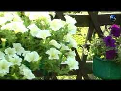 Zaręby Kościelne. Wybiorą najpiękniejszy ogródek w gminie