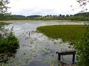 Znaleźliśmy 16. jezioro w Olsztynie. Jezioro Zgniłek