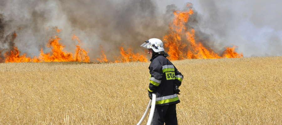 Pożar między Dąbrową i Zieloną strawił 57 ha zbóż