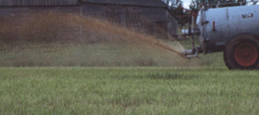 Enterokoki kałowe mogą pojawić się w wodzie pitnej z wylewanych na pola gnojowic