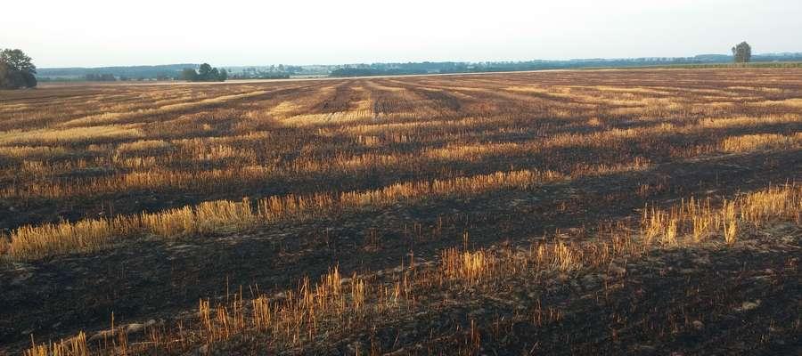 Spalone pole koło Klęczkowa