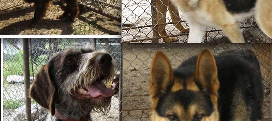 Cztery psy czekają na właścicieli