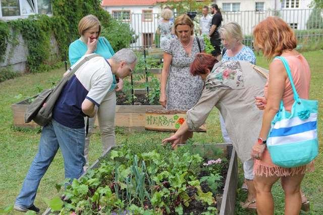 Owocowe i warzywne grządki w centrum Olsztyna - full image