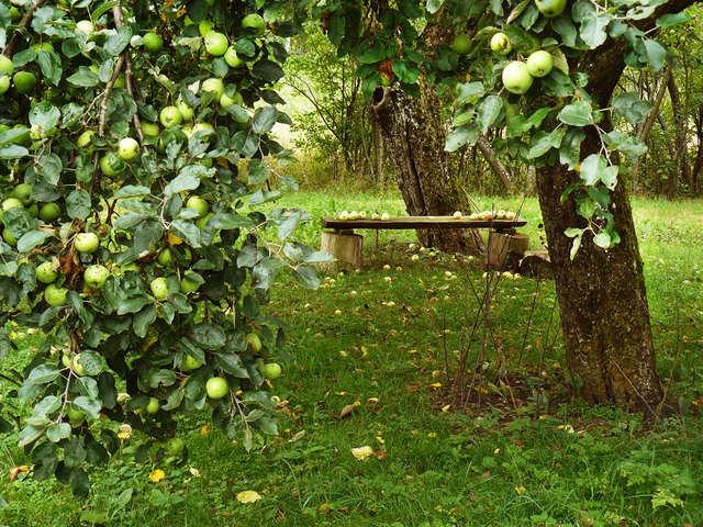 Święto Jabłka w olsztyńskiej BWA - full image
