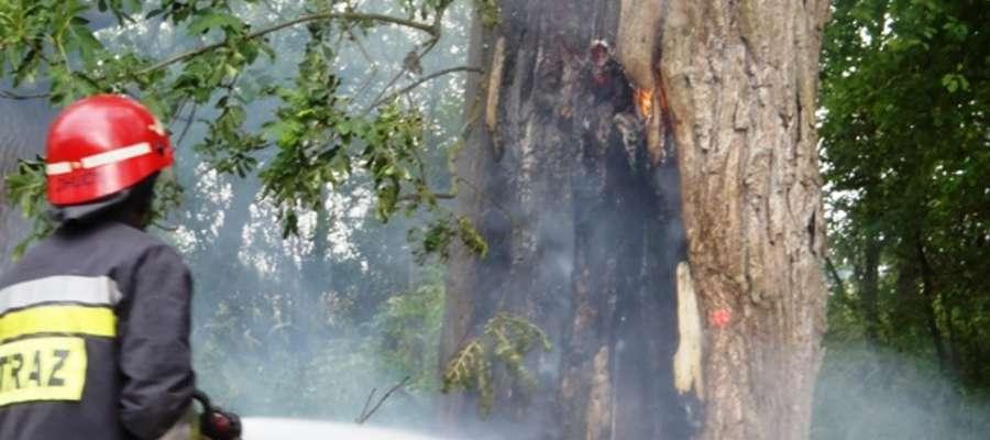W minionym tygodniu braniewscy strażacy gasili pożar drzewa w miejscowości Ujście