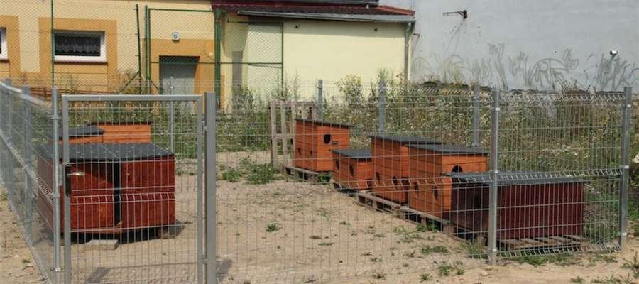 Strefa Kotów Wolnożyjących w Giżycku przy ulicy Kr. Jadwigi