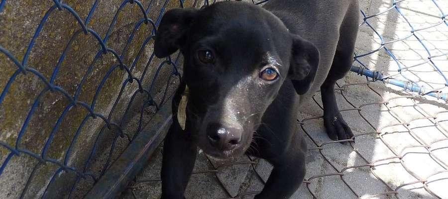 Czy tego psiaka nie warto adoptować?