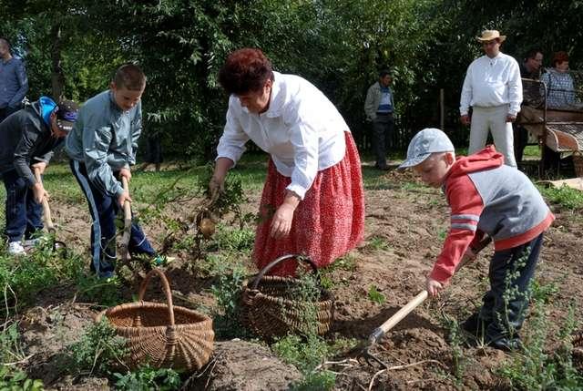 Święto ziemniaków czyli wykopki w skansenie - Zaproszenie - full image