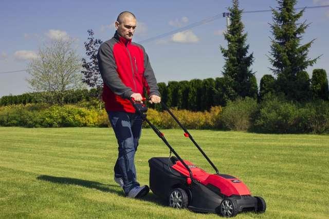Trawnik nie wystarczy tylko podlewać - full image