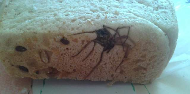Chleb z takim niecodziennym dodatkiem kupiła pewna ostródzianka
