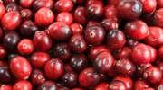 Żurawina – drobne i czerwone owoce o niesamowitych właściwościach leczniczych