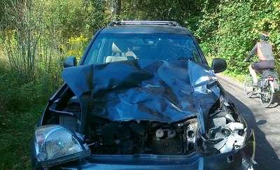 Toyota uderzyła w łosia