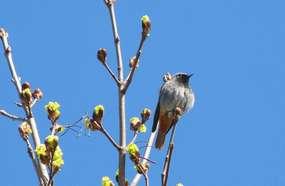 Mrągowo: ptaki na peryferiach