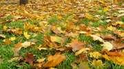Co zrobić z jesiennymi liśćmi?