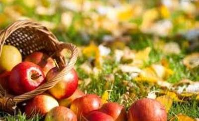 Tydzień jedzenia jabłek u salezjanów