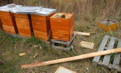 Kto niszczy pszczoły, niszczy życie