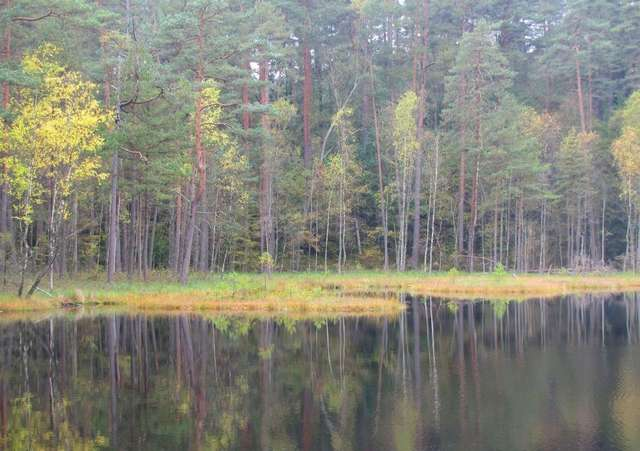 Pływające wyspy na dystroficznym jeziorku w Mazurskim Parku Krajobrazowym - full image