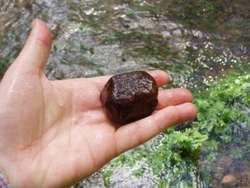 Kamień obrośnięty krasnorostem