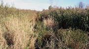 Rezerwat Przyrody Bagna Nietlickie