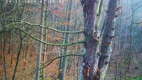 Z kamerą wśród puszczyków w Nadleśnictwie Dobrocin na Mazurach