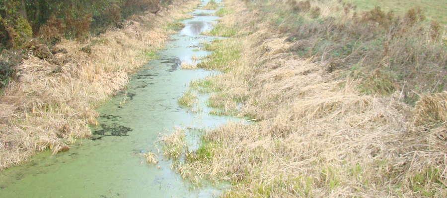 Tak dziś wygląda niewielka rzeka na granicy powiatów