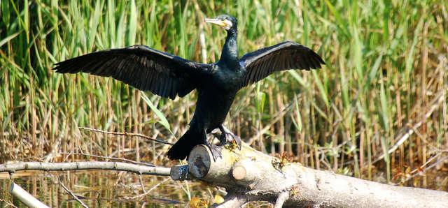 Rezerwat kormorana czarnego i czapli siwej w Kątach Rybackich - full image