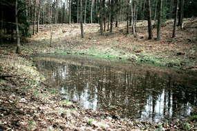 Rezerwat przyrody Mszar w Olsztynie