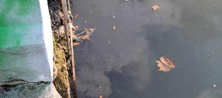 Woda w Kanale Łuczańskim przy jednym z ujść kanalizacji deszczowej