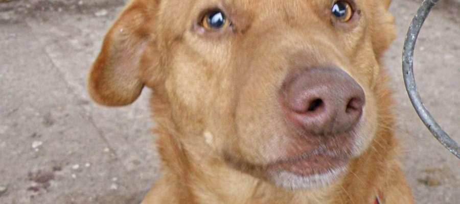Ten pies czeka na właściciela, bądź inny przyjazny dach