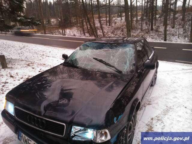 Audi zderzyło się z łosiem. Zwierzę zginęło - full image