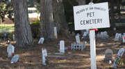Cmentarz dla zwierząt mógłby powstać pod Dobrym Miastem